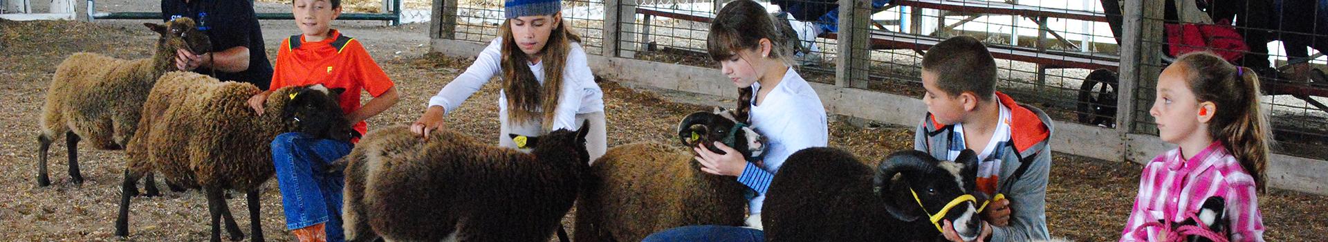 Wisconsin Sheep & Wool Festival | Sheep Shows - MSSBA Show